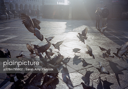 Pigeons in sunlit square - p378m795802 by Sarah Amy Fishlock