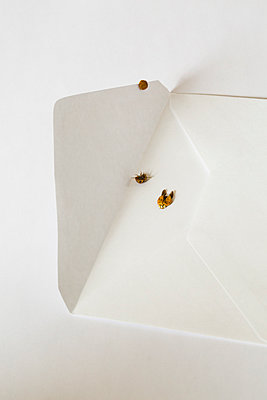 Ladybirds on white envelope, one dead, one alive and one on the back - p1682m2260733 by Régine Heintz