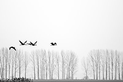 Four cranes - p739m886585 by Baertels