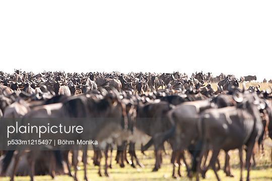 Wildebeest herd - p533m1215497 by Böhm Monika