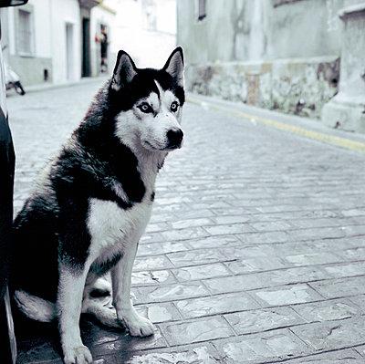 Wacher Hund - p545m817056 von Ulf Philipowski