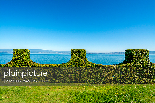 Hedge in water front, France - p813m1172543 by B.Jaubert
