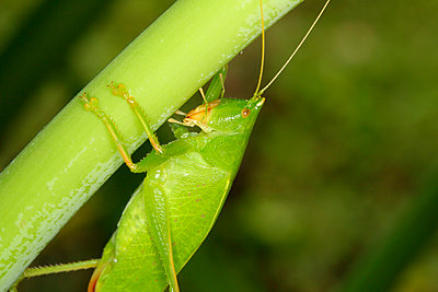 Close-up of grasshopper - p312m956664f by Jens Rydell