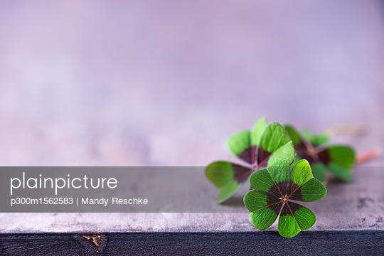 p300m1562583 von Mandy Reschke