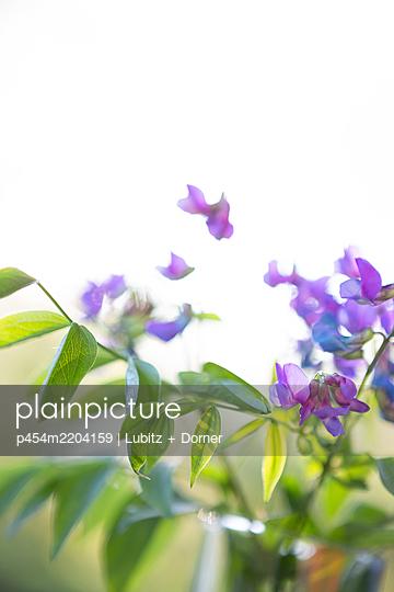 Flying flowers - p454m2204159 by Lubitz + Dorner