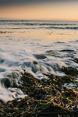 seaweed and ocean scenic at sunset - p1014m1019551 by Kristianne Koch Riddle