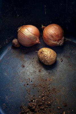 Onions - p1059m903816 by Philipp Reiss