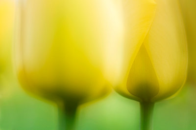 Creative abstract macro picture of a tulip - p1144m943830 by Misja Smits