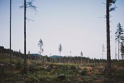 Olympic Peninsula - p1223m1044560 by stefanie-hoepner