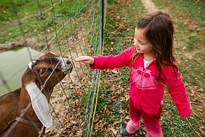 High angle view of girl touching kid goat through fence at farm - p1166m2000561 by Cavan Images