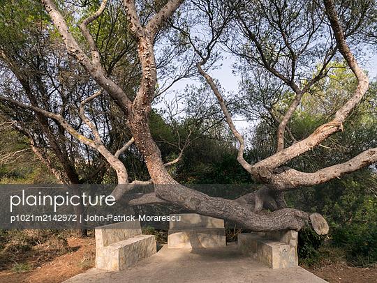 Sitzplatz unter einem Baum - p1021m2142972 von MORA