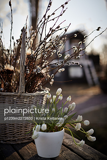 Springlike decoration, basket with willow catkins - p1239m2272833 by Krista Keltanen