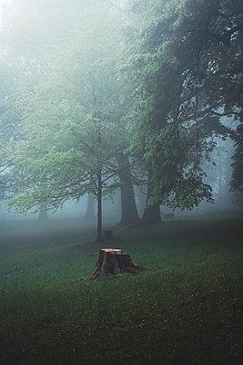 Germany, Wuppertal, scenic view of foggy forest - p300m2143541 by Dirk Wüstenhagen