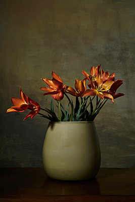 Vase with tulips in front of wall at twilight - p1312m2272146 by Axel Killian