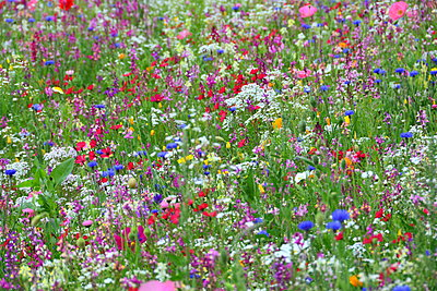 Flower field - p148m2111281 by Axel Biewer