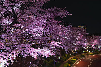 Cherry blossoms - p307m1174659 by Score. by Aflo