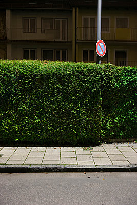 Hedge - p954m963104 by Heidi Mayer