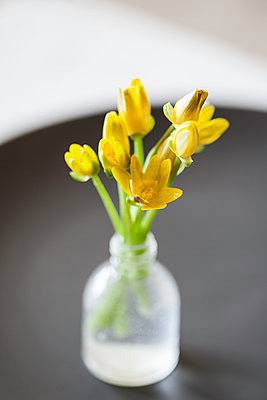 Celandine in tiny bottle - p1470m1558943 by julie davenport