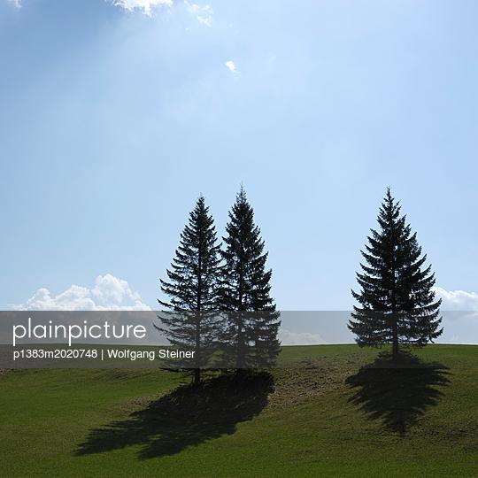 Wiese mit Bäumen im Gegenlicht - p1383m2020748 von Wolfgang Steiner