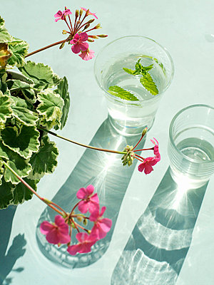 A pelargonia and a glass of water on a balcony Sweden. - p31219743f by Lena Granefelt