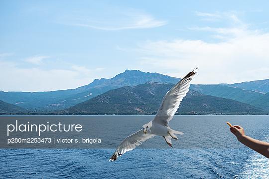 Seagull - p280m2253473 by victor s. brigola