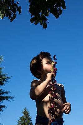 Boy holding a flower - p1308m2126727 by felice douglas