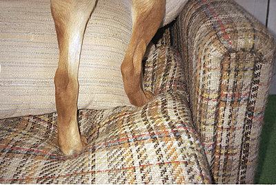 Iggy pop's legs  - p5670517 by Jesse Untracht-Oakner