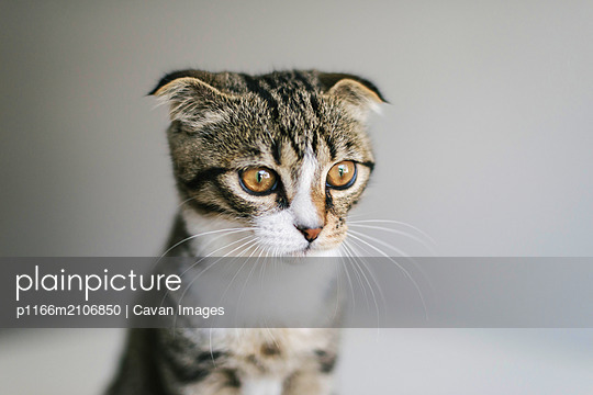Low angle view of cat looking away while sitting  on white background - p1166m2106850 by Cavan Images