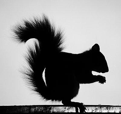 Eichhörnchen - p415m853921 von Tanja Luther