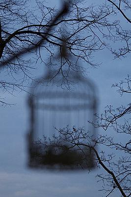 Birdcage - p7390367 by Baertels