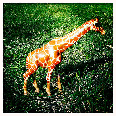 Giraffe - p979m909868 by Jordan photography