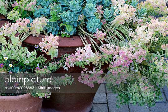 p1100m2025683 von Mint Images