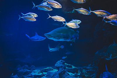 Blue depth - p1150m1209153 by Elise Ortiou Campion