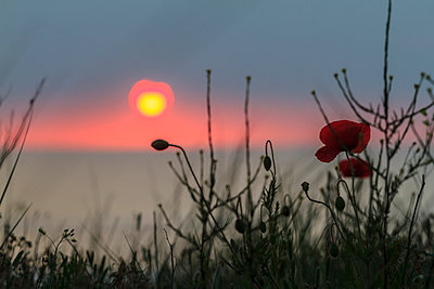 Sunset - p417m912322 by Pat Meise
