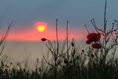 Sonnenuntergang - p417m912322 von Pat Meise