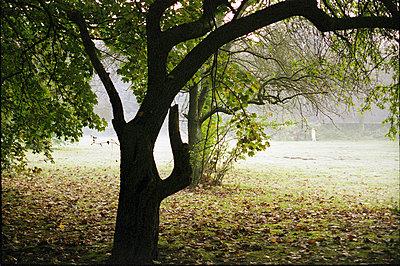 Baeume im Stadtpark - p9792683 von Otto
