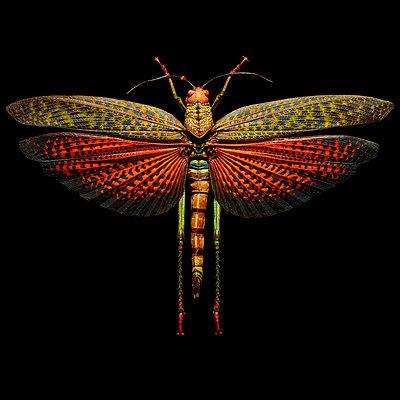 Grasshopper - p587m1104316 by Spitta + Hellwig