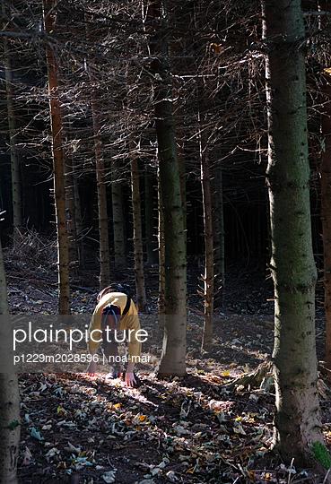Im Wald - p1229m2028596 von noa-mar