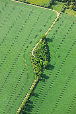 Copse of trees in a green field of crops - p1048m1135519 by Mark Wagner