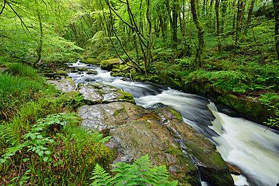 United Kingdom, England, Cornwall, Liskeard, River Fowey - p300m2083859 by Martin Rügner
