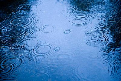 Raindrops - p44210877f by Kelly Redinger
