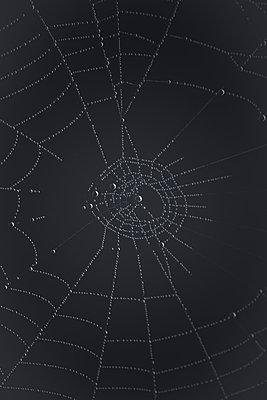Spinnennetz - p647m1119958 von Tine Butter