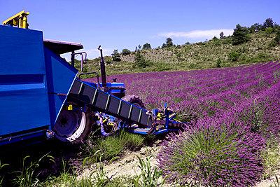 Provence - p817m1171096 von Daniel K Schweitzer