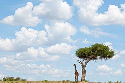 Clouds in Africa - p5330246 by Böhm Monika