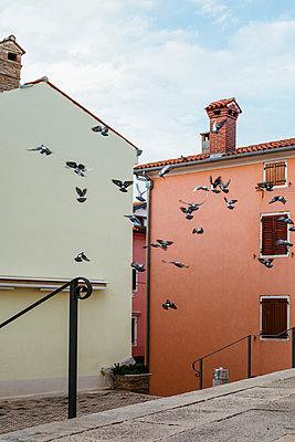 Pigeons in flight at the stairs of the parish church St. Martin - p728m2027220 by Peter Nitsch