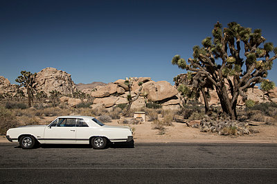 Joshua Tree National Park - p948m940234 by Sibylle Pietrek