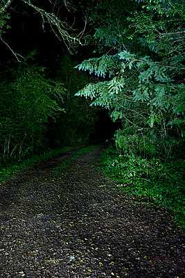 Forest path at night - p248m853935 by BY