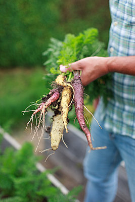 Man holding bunch of parsley and carrot - p312m1533012 by Christina Strehlow