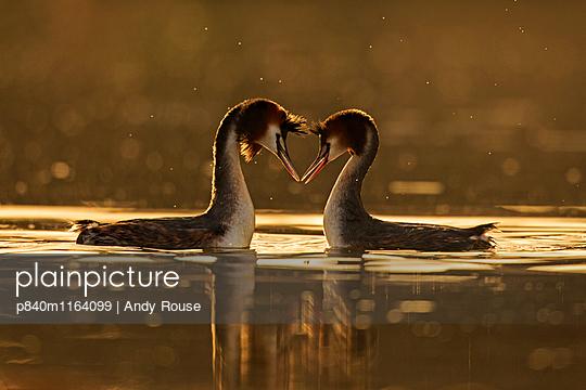 p840m1164099 von Andy  Rouse