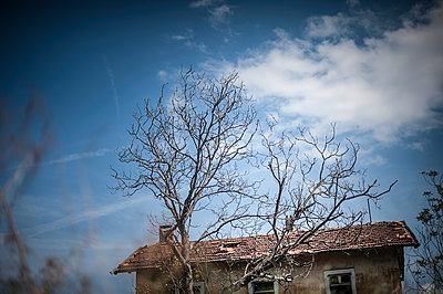 Old tree and old house - p1007m1134899 by Tilby Vattard